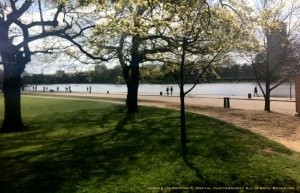 Mimosa @ Hyde Park